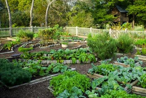 comment obtenir un beau potager potager jardin potager jardin. Black Bedroom Furniture Sets. Home Design Ideas