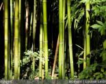 Mode d'emploi: bien utiliser le bambou pour son potager