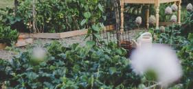 Que faire au jardin en juin ?