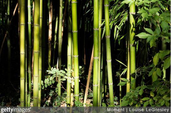 bambou-jardin-potager-utiliser-tuto-mode-demploi
