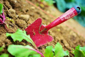 une petite pelle pour jardiner et planter