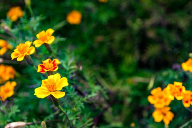 Jolies fleurs jaune dans un jardin