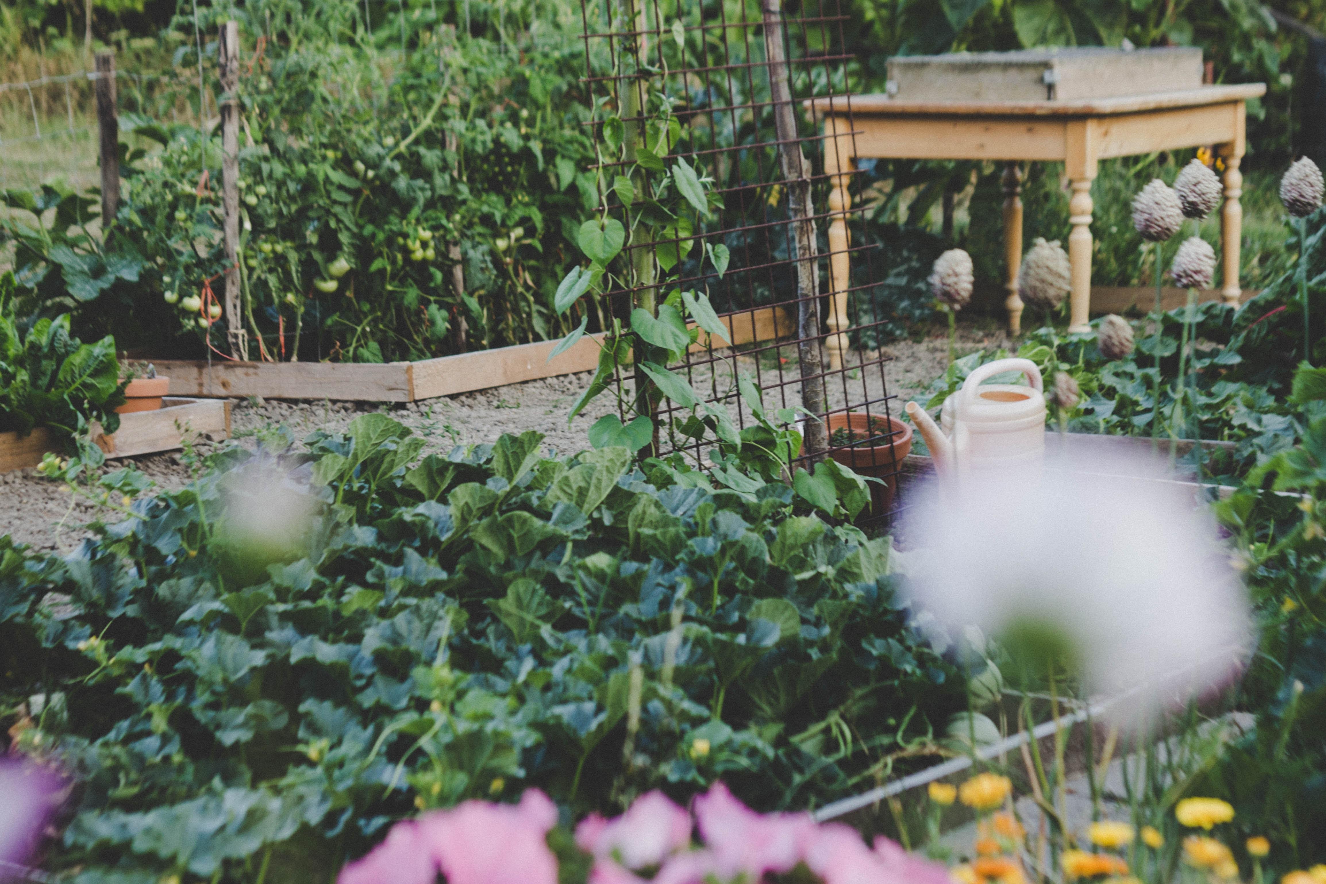 100 Fantastique Suggestions Que Faire Au Jardin En Juin